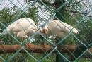 湖州德清下渚湖 20091101